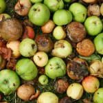 La corrupción ¿Son manzanas podridas o es el cesto entero?